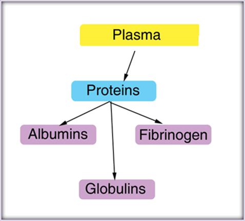Image shows the plasma proteins