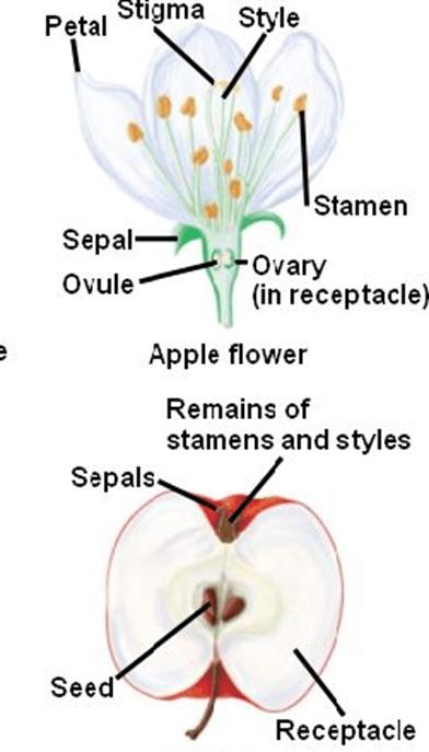 Biology Class 12 Ncert Solutions  Chapter 2 Sexual