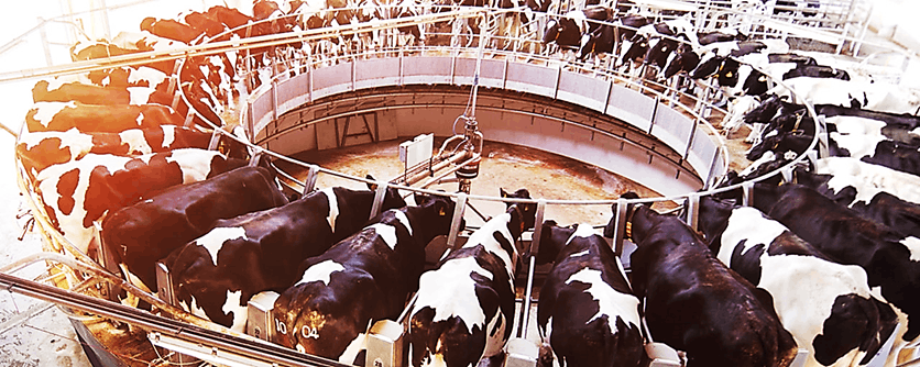 Image of Milk Production