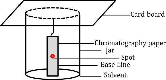 Chromatography paper in solvent