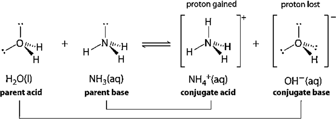 Structure of Conjugate Acids and Conjugate Bases
