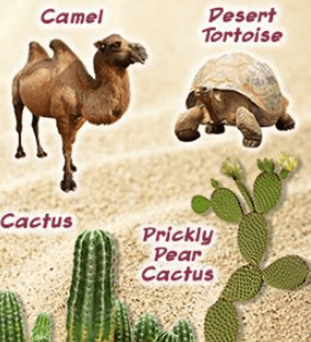 Camel and desert tortoise