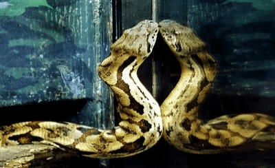 Image of Snake In Mirror