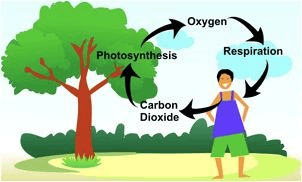As showing in images is a result for oxygen cycle