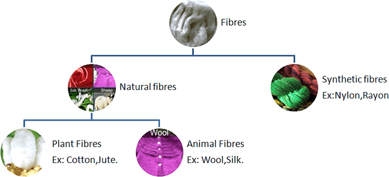 Diagram shows two types of fibres