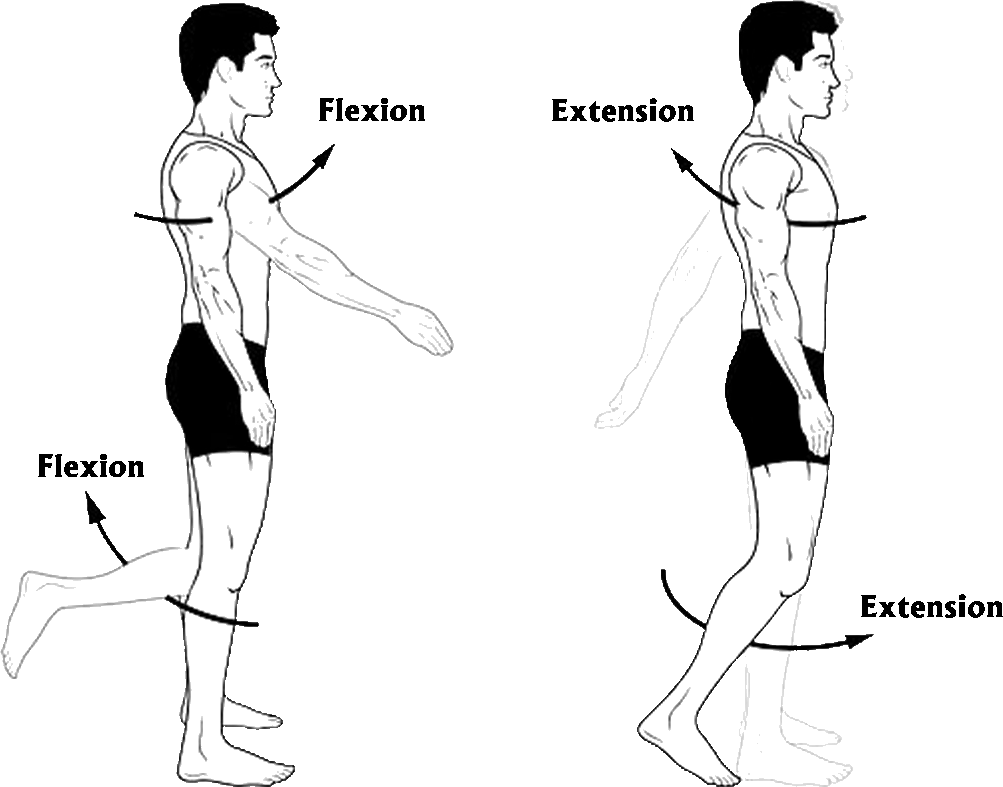 As showing in images is a result for movement of the body