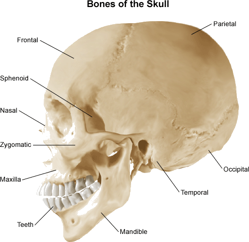 As showing in images is a Result for the Bones of skull