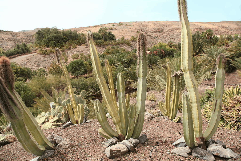 As showing in Image is a result for cactus