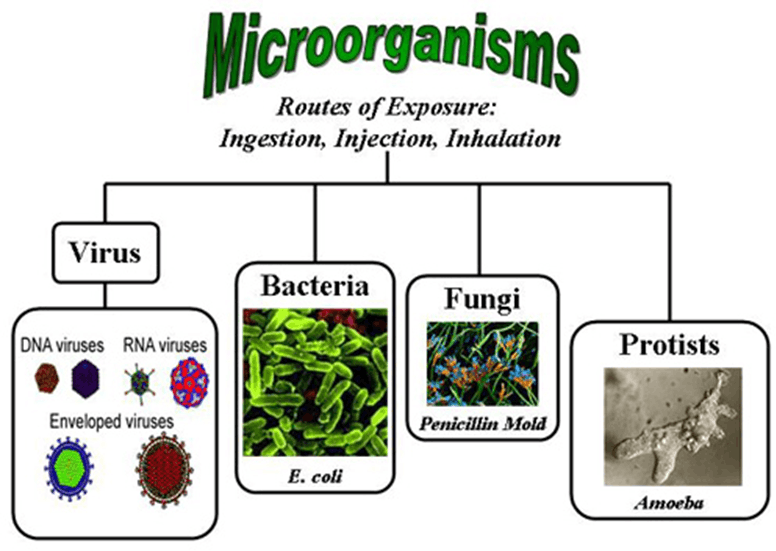 This diagram shows types of microorganisms