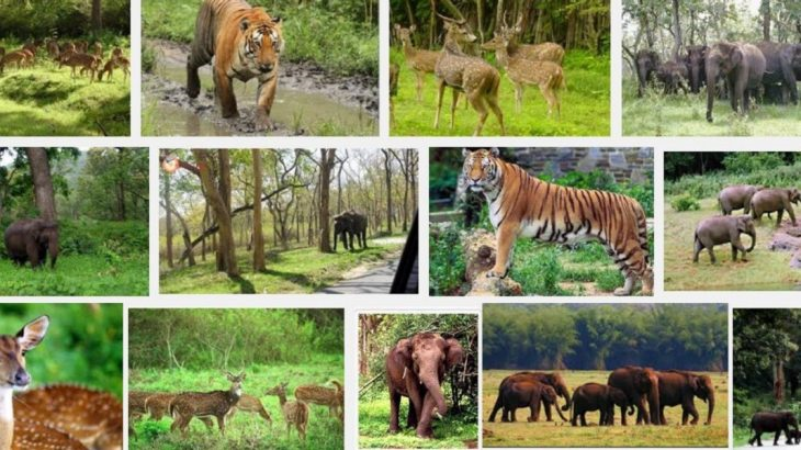 Image result for wildlife sanctuary.