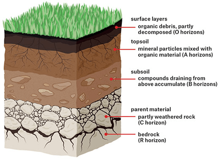 This diagram shows the top layer of soil is exposed