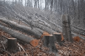 Image result for We go on cutting trees