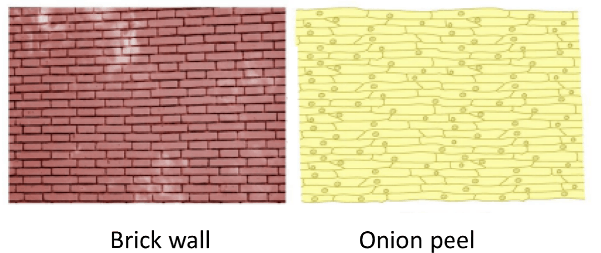 As showing in image is a Brick wall and Onion peel