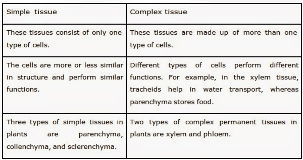 Q 4 Simple Tissue And Complex Tissue.