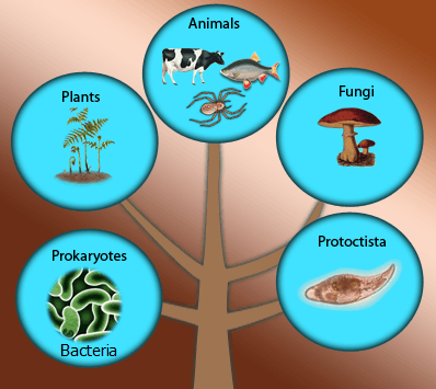 Image of The Five Kingdoms For Diversity In Living Organisms