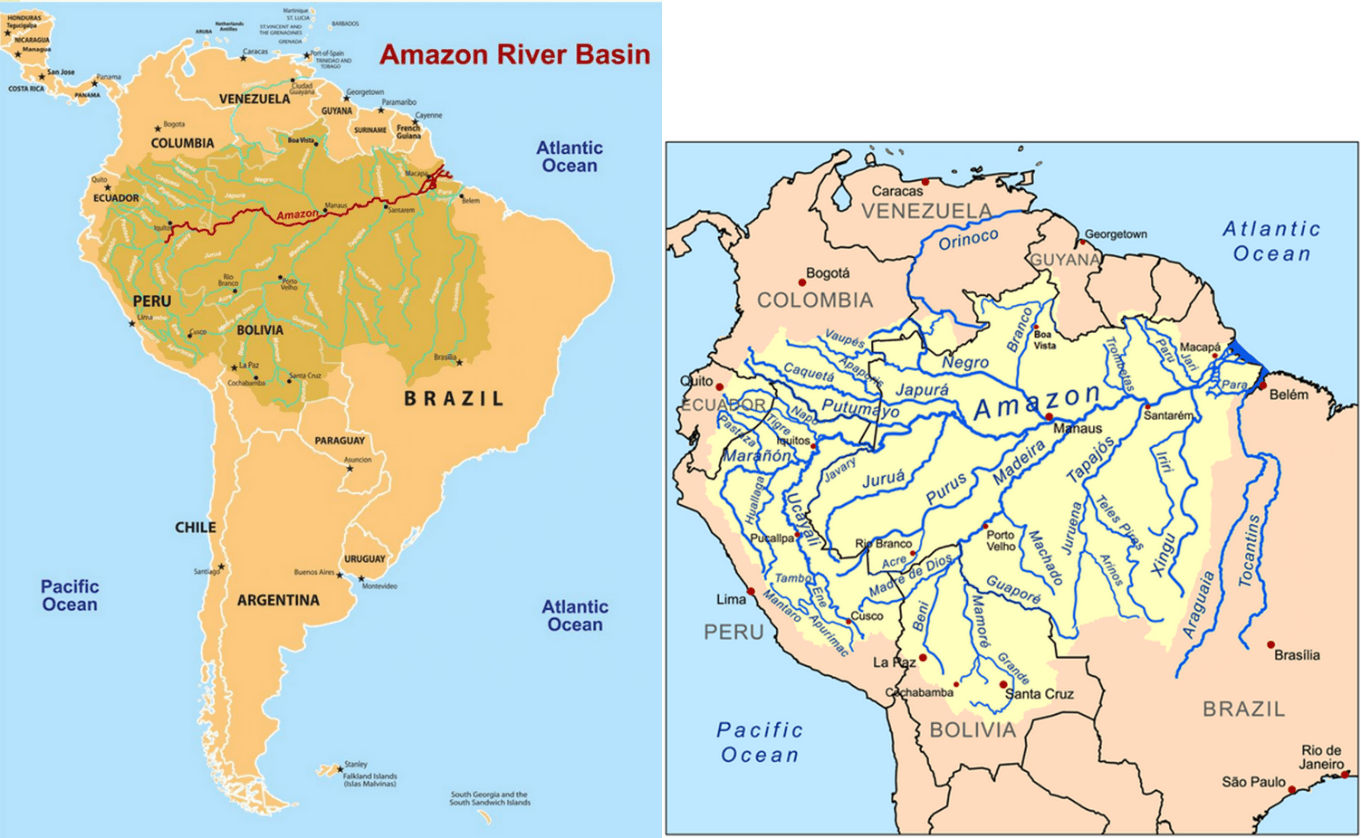Image of Life in Amazon Basin