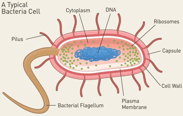 Image showing bacteria cell structure.