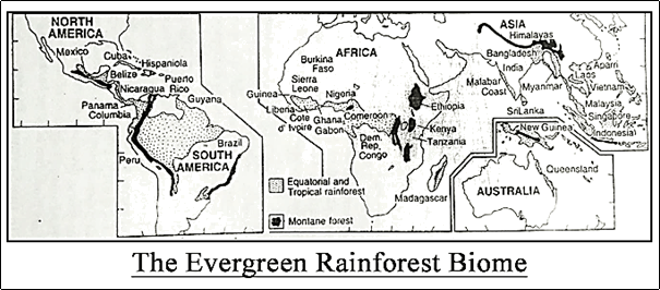 Evergreen Rainforest Biome