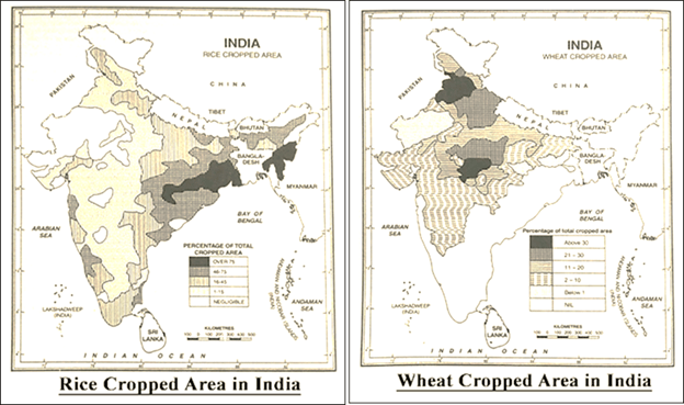 Rice and Wheat Cropped Area In India