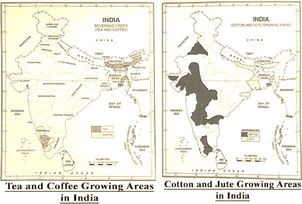 Tea and Coffee, Cotton and Jute Growing Areas India